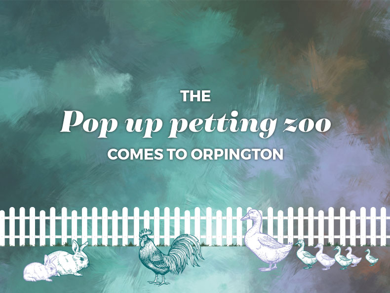 Orpington - Petting Zoo (15.06.2019)